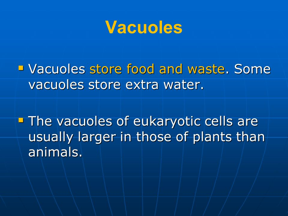 Vacuoles Vacuoles store food and waste. Some vacuoles store extra water. Vacuoles store food and waste. Some vacuoles store extra water. The vacuoles
