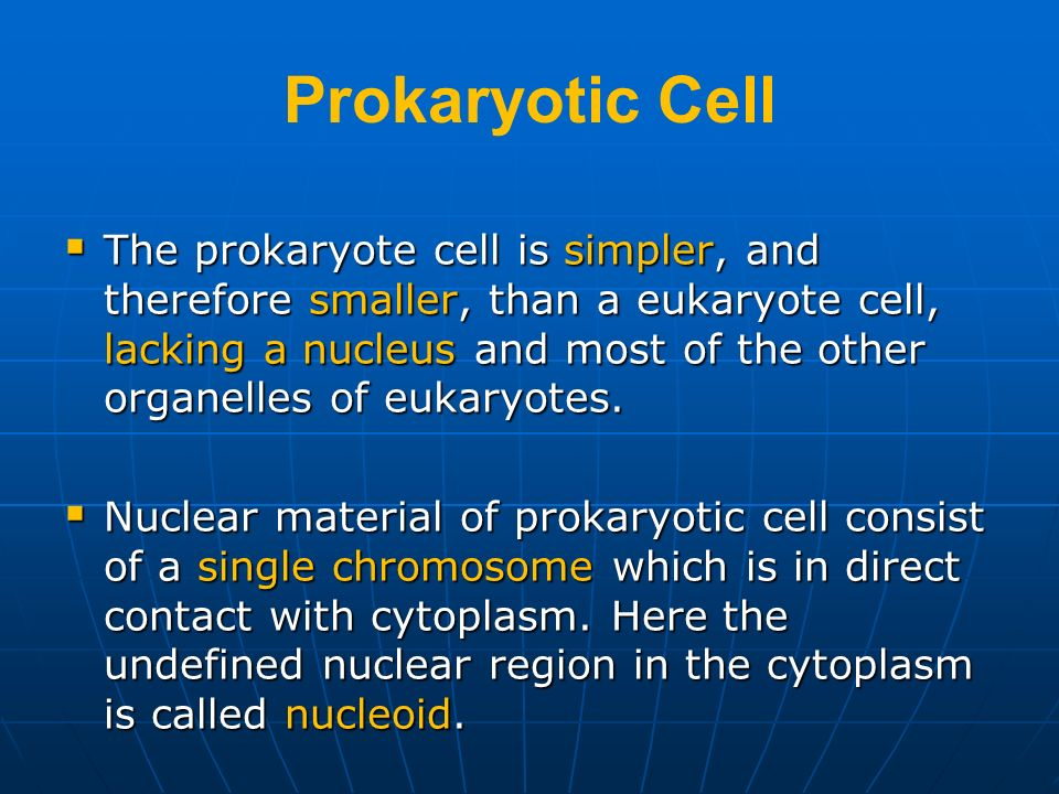 Prokaryotic Cell The prokaryote cell is simpler, and therefore smaller, than a eukaryote cell, lacking a nucleus and most of the other organelles of e