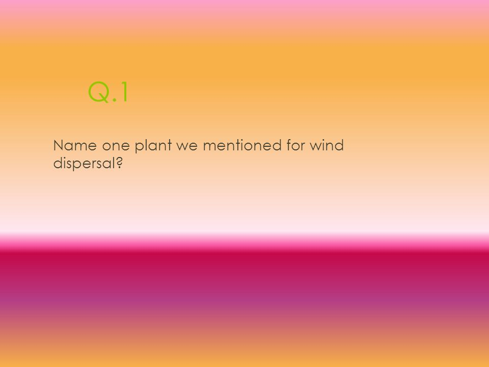 Q.1 Name one plant we mentioned for wind dispersal?