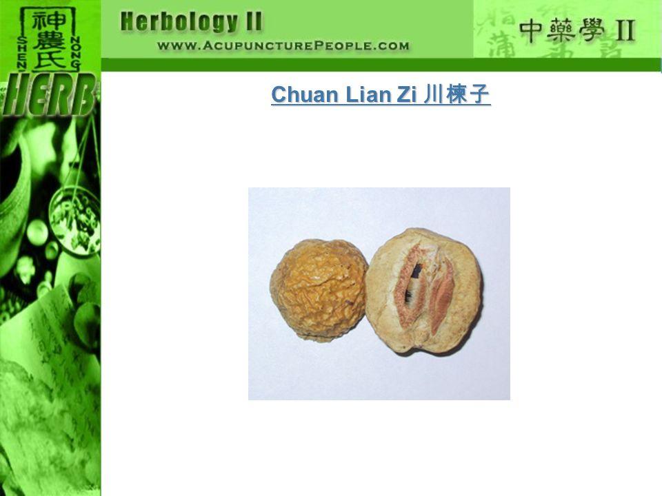 Chuan Lian Zi Chuan Lian Zi