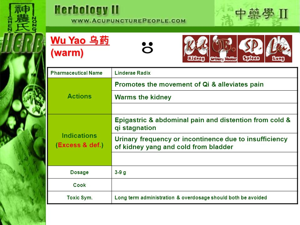 Pharmaceutical NameLinderae Radix Actions Promotes the movement of Qi & alleviates pain Warms the kidney Indications (Excess & def.) Epigastric & abdominal pain and distention from cold & qi stagnation Urinary frequency or incontinence due to insufficiency of kidney yang and cold from bladder Dosage3-9 g Cook Toxic Sym.Long term administration & overdosage should both be avoided Wu Yao Wu Yao (warm)