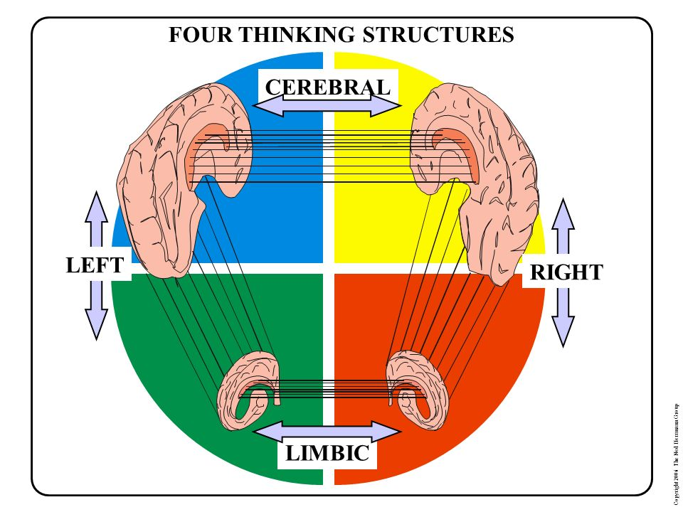 Copyright 2006 The Ned Herrmann Group FOUR THINKING STRUCTURES
