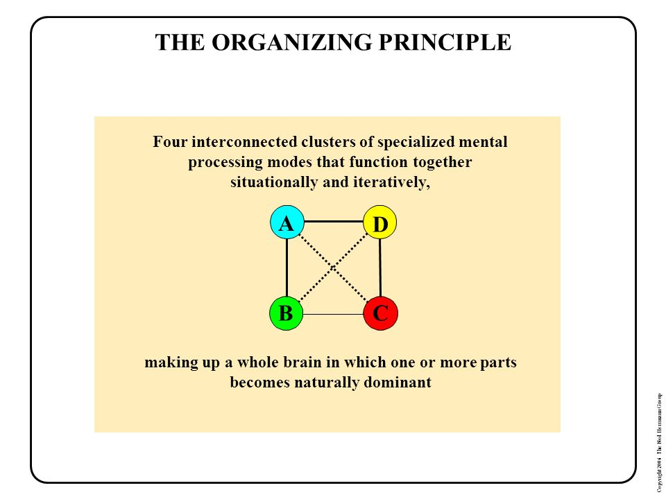 Copyright 2006 The Ned Herrmann Group THE ORGANIZING PRINCIPLE Four interconnected clusters of specialized mental processing modes that function toget