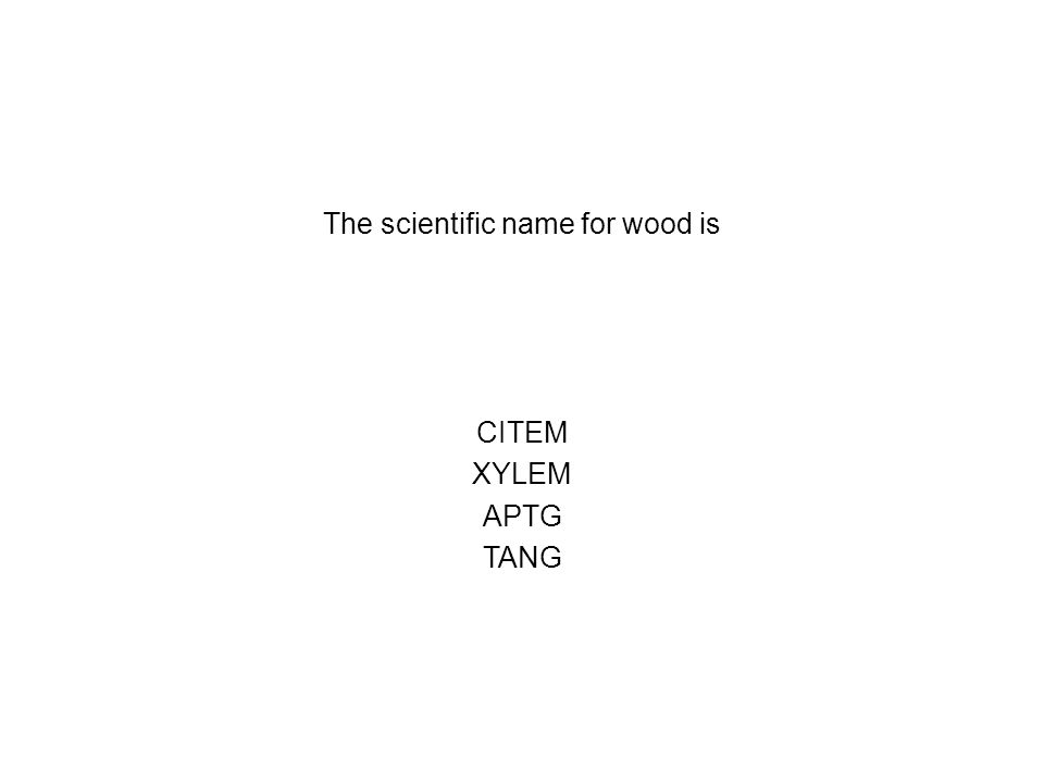 The scientific name for wood is CITEM XYLEM APTG TANG