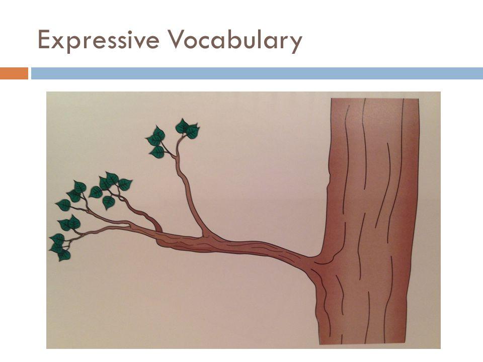 Expressive Vocabulary