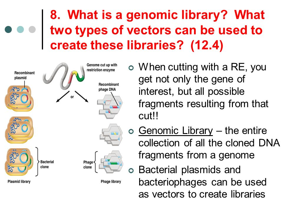 8. What is a genomic library? What two types of vectors can be used to create these libraries? (12.4) When cutting with a RE, you get not only the gen
