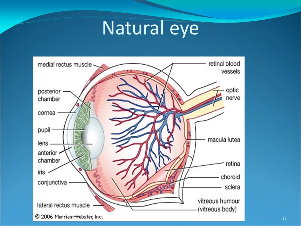 WORKING OF NATURAL EYE The light rays enter the eye through the cornea.