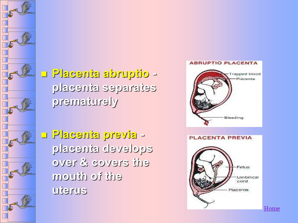 Home Vaginal Bleeding n Early pregnancy - may be normal n Later stages of pregnancy u Placenta abruptio - placenta separates prematurely u Placenta pr