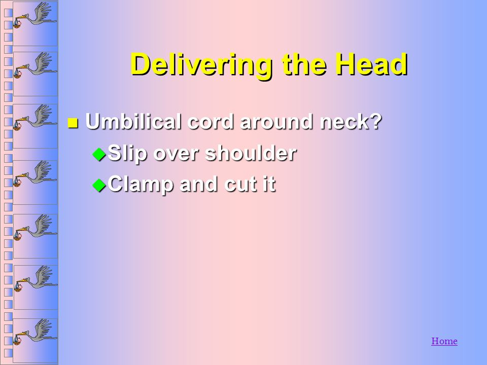 Home Delivering the Head n Place fingers on bony part of skull n If amniotic sac does not break, or has not broken: u Use clamp to puncture u Push awa