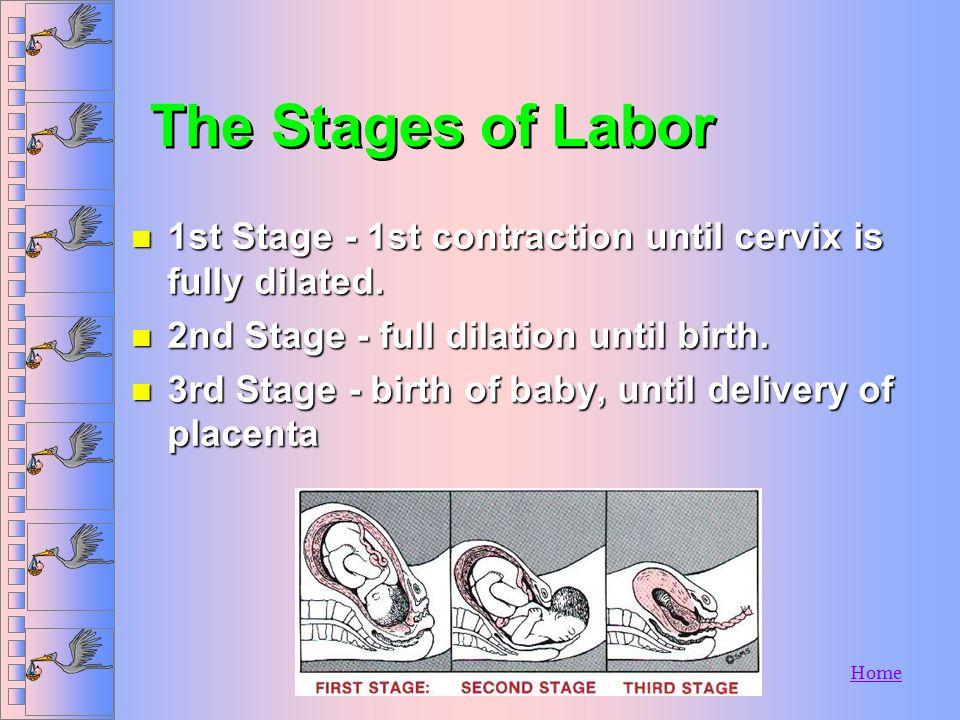 Home n Fetus n Uterus n Placenta n Umbilical Cord n Amniotic Sac n Cervix Anatomy Review