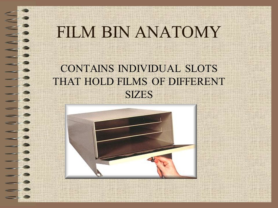 FILM BIN ANATOMY CONTAINS INDIVIDUAL SLOTS THAT HOLD FILMS OF DIFFERENT SIZES
