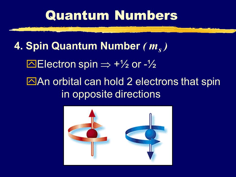 Quantum Numbers 4. Spin Quantum Number ( m s ) yElectron spin +½ or -½ yAn orbital can hold 2 electrons that spin in opposite directions