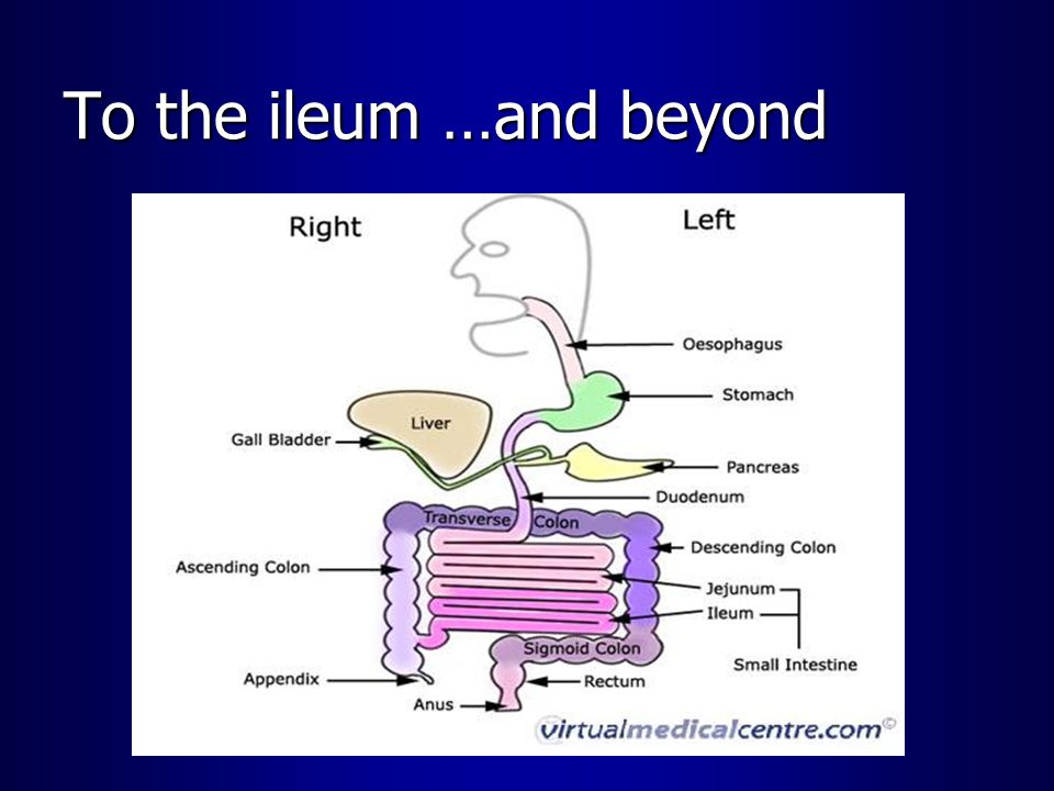 To the ileum …and beyond