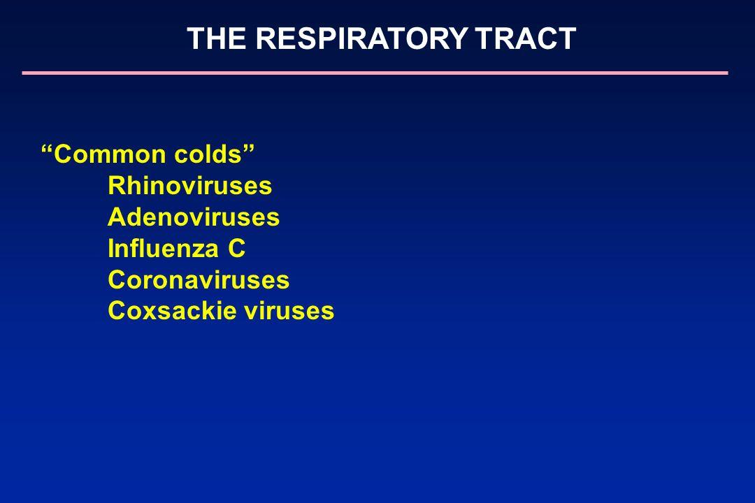 Common colds Rhinoviruses Adenoviruses Influenza C Coronaviruses Coxsackie viruses THE RESPIRATORY TRACT