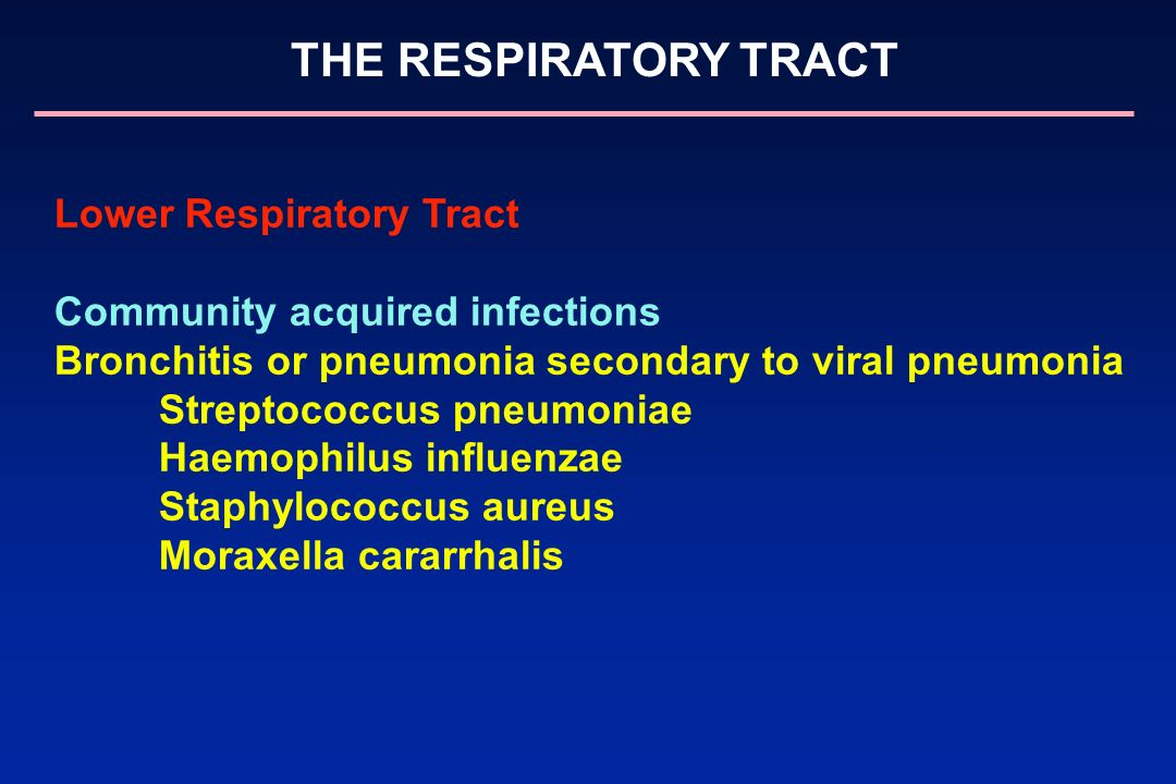 THE RESPIRATORY TRACT Lower Respiratory Tract Community acquired infections Bronchitis or pneumonia secondary to viral pneumonia Streptococcus pneumon