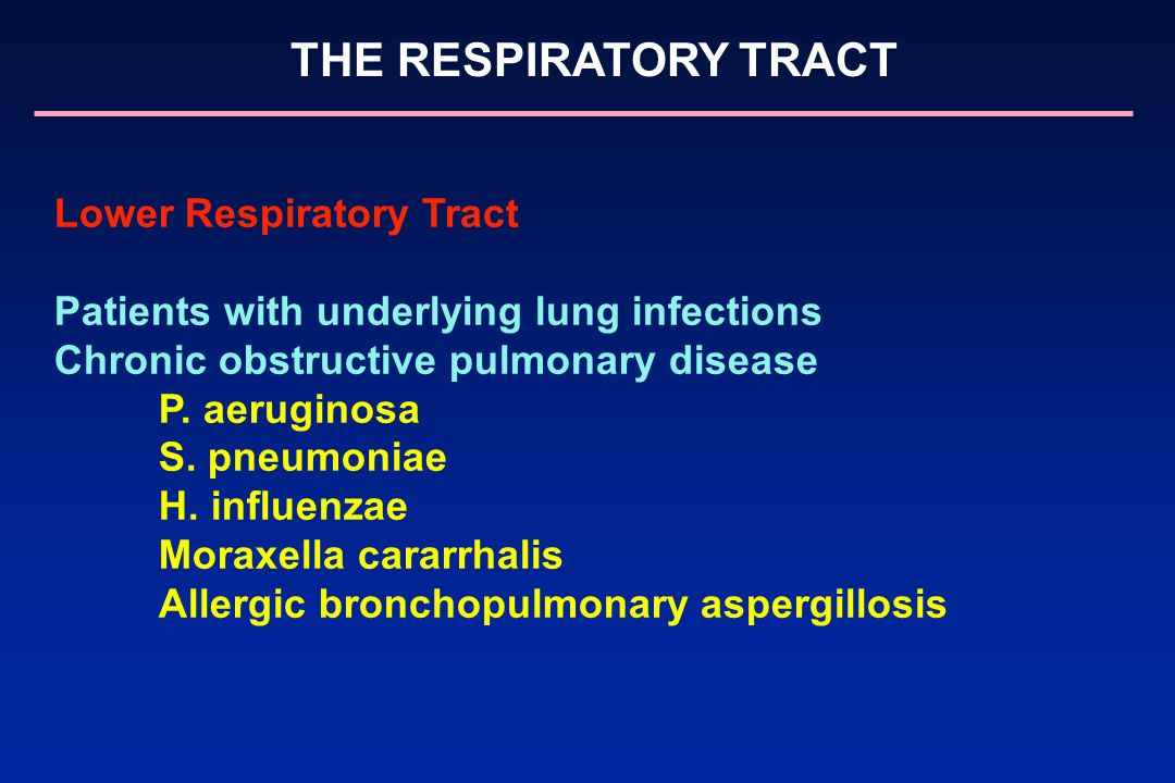 THE RESPIRATORY TRACT Lower Respiratory Tract Patients with underlying lung infections Chronic obstructive pulmonary disease P. aeruginosa S. pneumoni