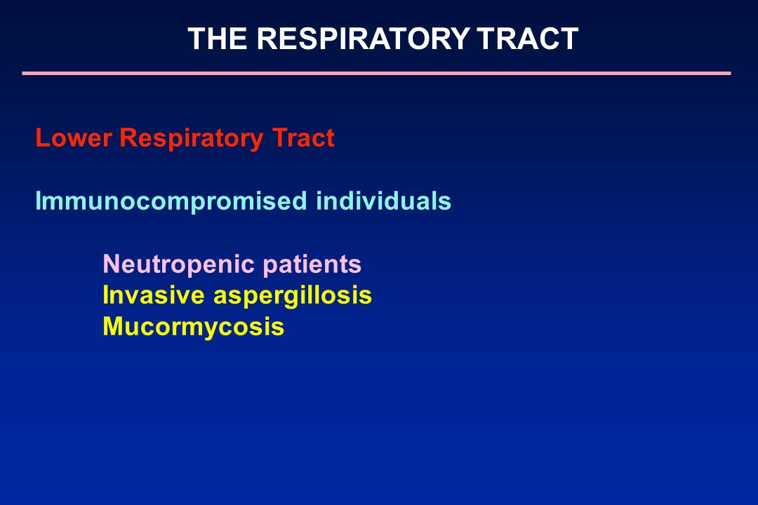 THE RESPIRATORY TRACT Lower Respiratory Tract Immunocompromised individuals Neutropenic patients Invasive aspergillosis Mucormycosis
