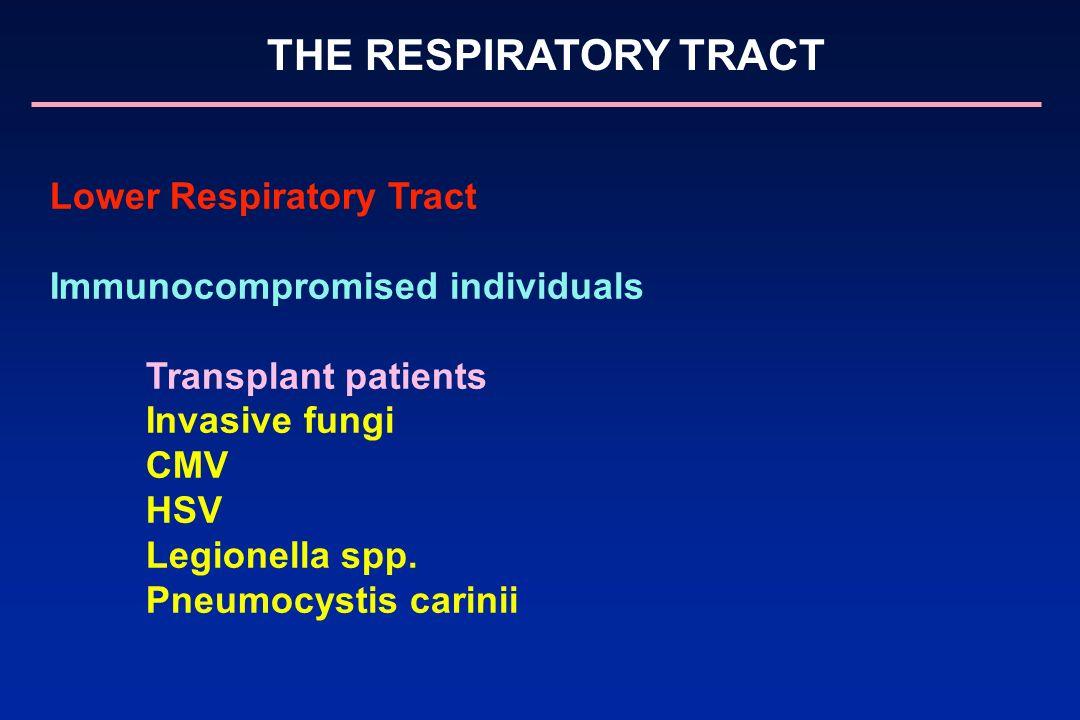 THE RESPIRATORY TRACT Lower Respiratory Tract Immunocompromised individuals Transplant patients Invasive fungi CMV HSV Legionella spp. Pneumocystis ca