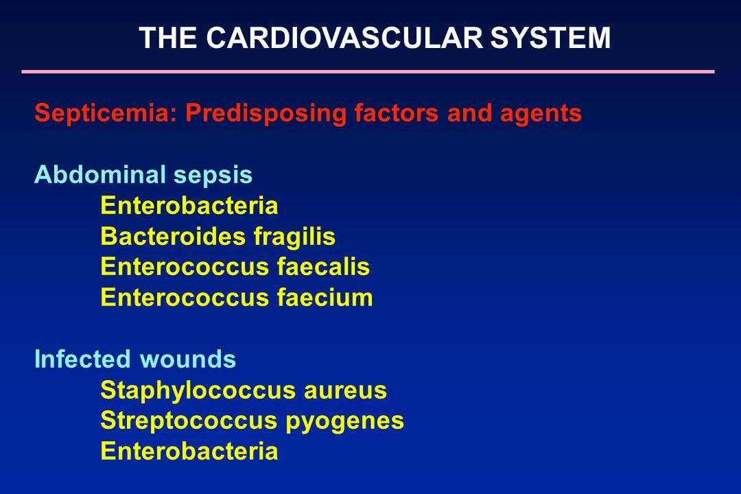 THE CARDIOVASCULAR SYSTEM Septicemia: Predisposing factors and agents Abdominal sepsis Enterobacteria Bacteroides fragilis Enterococcus faecalis Enter