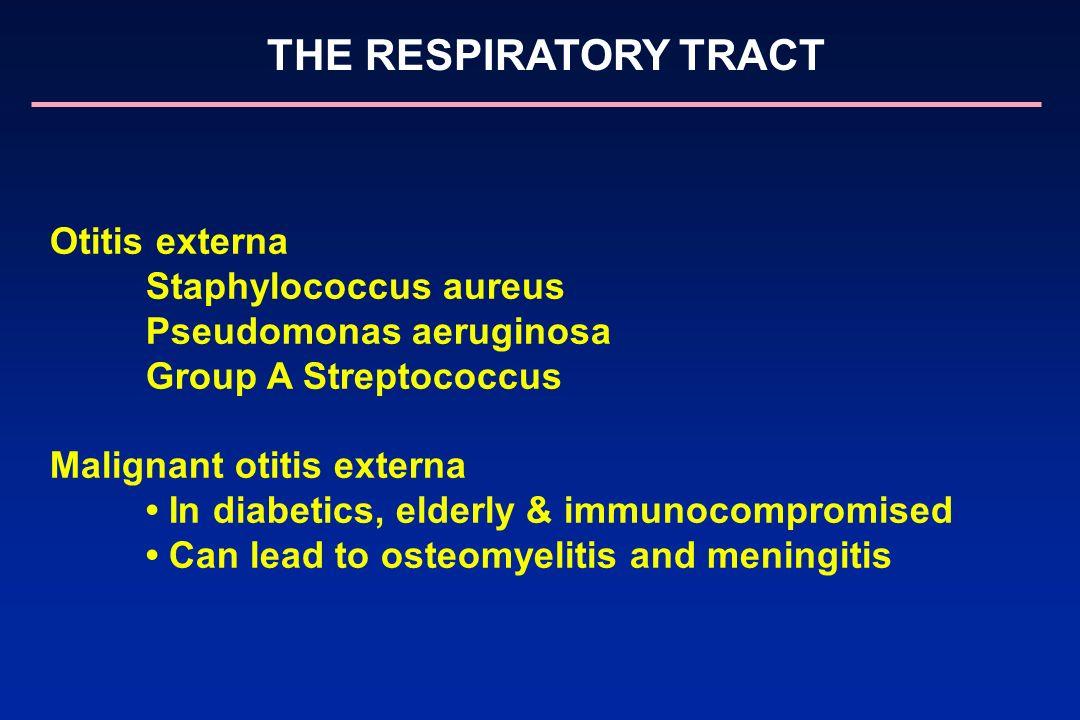 THE RESPIRATORY TRACT Otitis externa Staphylococcus aureus Pseudomonas aeruginosa Group A Streptococcus Malignant otitis externa In diabetics, elderly