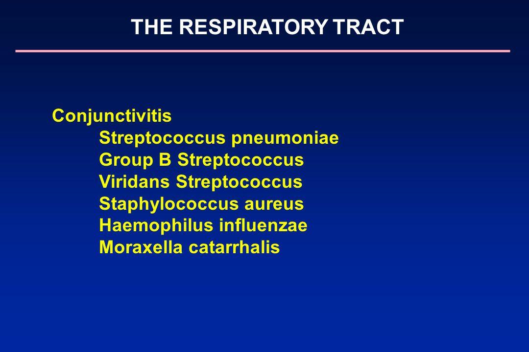 Conjunctivitis Streptococcus pneumoniae Group B Streptococcus Viridans Streptococcus Staphylococcus aureus Haemophilus influenzae Moraxella catarrhali