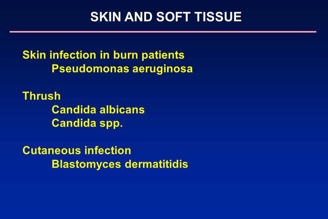 SKIN AND SOFT TISSUE Skin infection in burn patients Pseudomonas aeruginosa Thrush Candida albicans Candida spp. Cutaneous infection Blastomyces derma