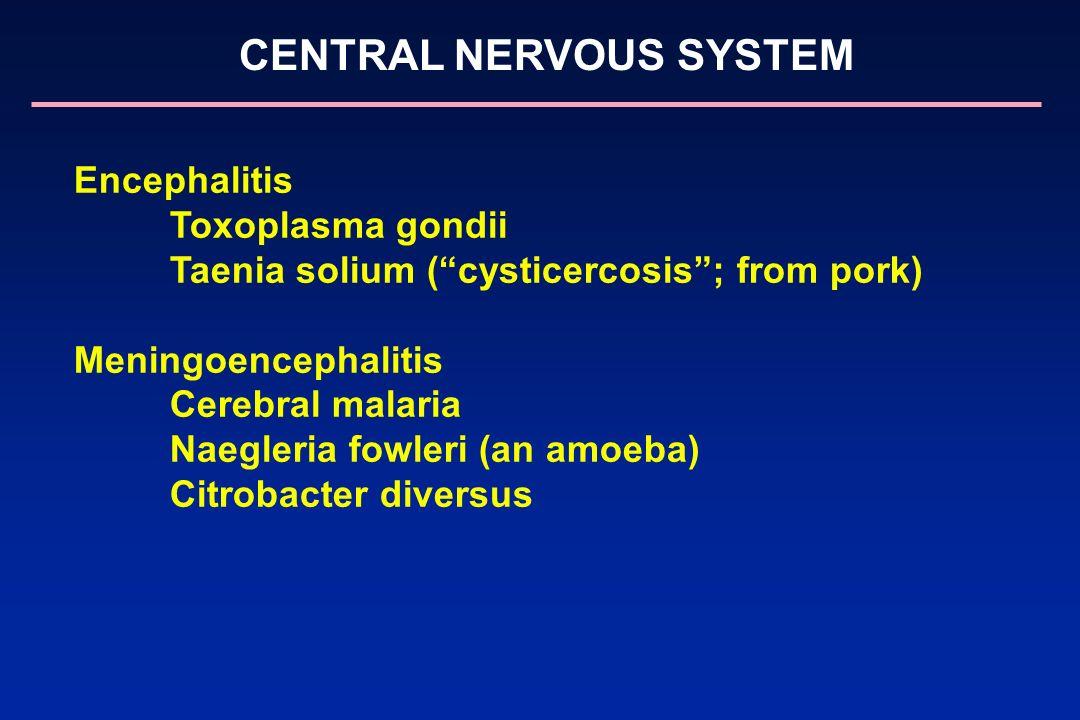 CENTRAL NERVOUS SYSTEM Encephalitis Toxoplasma gondii Taenia solium (cysticercosis; from pork) Meningoencephalitis Cerebral malaria Naegleria fowleri