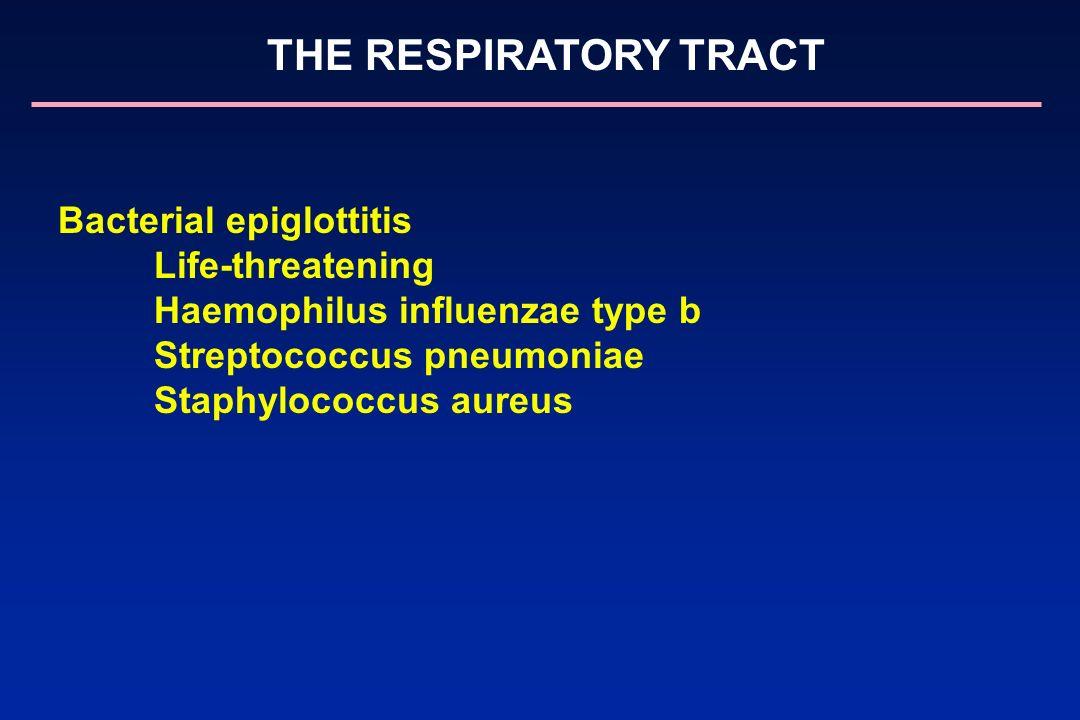 Bacterial epiglottitis Life-threatening Haemophilus influenzae type b Streptococcus pneumoniae Staphylococcus aureus THE RESPIRATORY TRACT