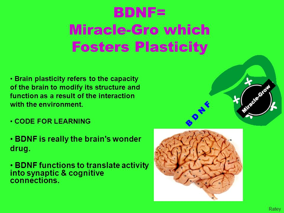 BDNF= Miracle-Gro which Fosters Plasticity Brain plasticity refers to the capacity of the brain to modify its structure and function as a result of th