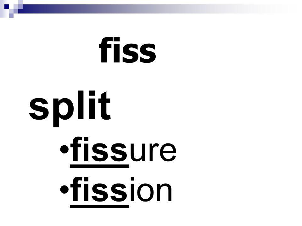 fiss split fissure fission