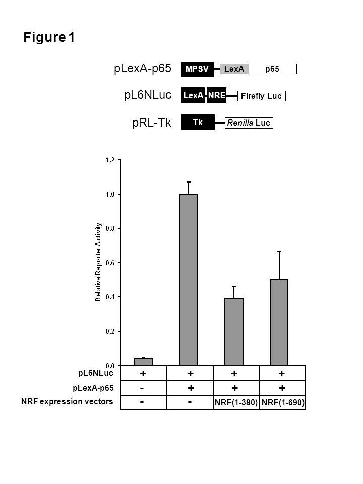 Figure 1 Renilla Luc Tk pRL-Tk Firefly Luc LexA pL6NLuc NRE pLexA-p65 p65LexA MPSV pLexA-p65 pL6NLuc NRF expression vectors - - NRF(1-380) NRF(1-690) - + + + + +
