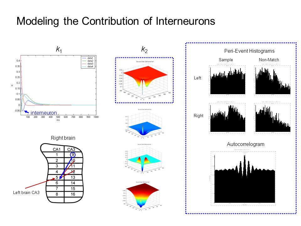 Modeling the Contribution of Interneurons Right brain Left brain CA3 k 1 k 2 SampleNon-Match Left Right Peri-Event Histograms Autocorrelogram interneu
