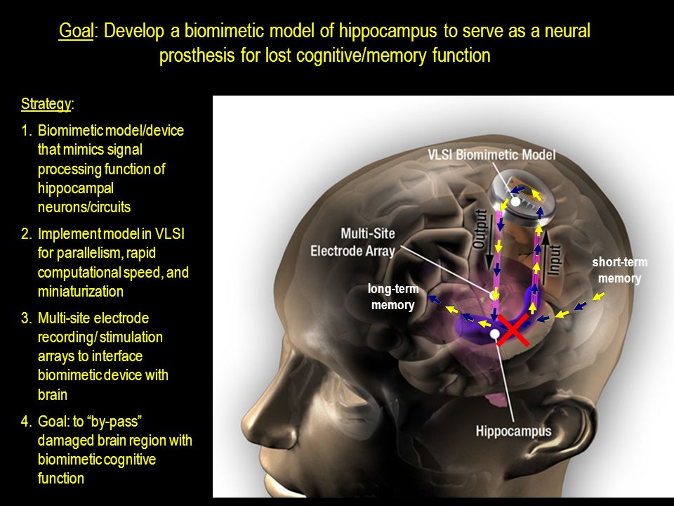 Goal: Develop a biomimetic model of hippocampus to serve as a neural prosthesis for lost cognitive/memory function Strategy: 1.Biomimetic model/device