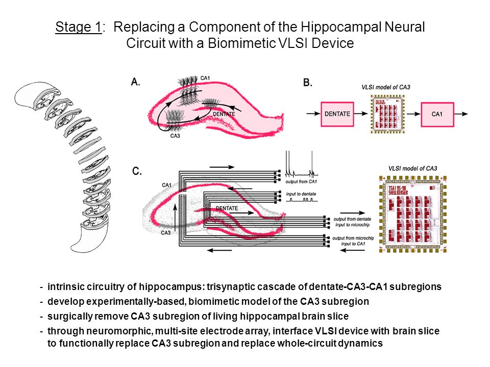 Hippocampal Model of CA3, Implemented in Hardware, Interfaced to a Slice through a Conformal, Multi-Site Planar Electrode (1) Four-Pulse Input Train to Dentate DENTATE CA3 CA1 (2) Dentate Output (3) FPGA Model: CA3 (4) FPGA Simulated CA3 Output (5) FPGA Input to CA1 (6) CA1 Output