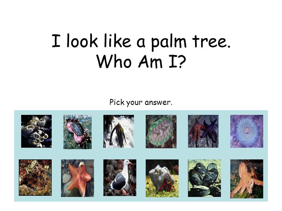 I look like a palm tree. Who Am I Pick your answer.