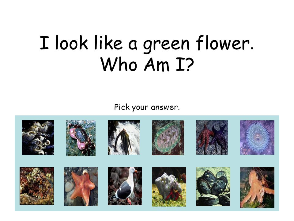 I look like a green flower. Who Am I? Pick your answer.