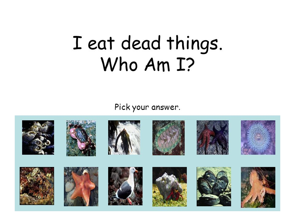 I eat dead things. Who Am I? Pick your answer.