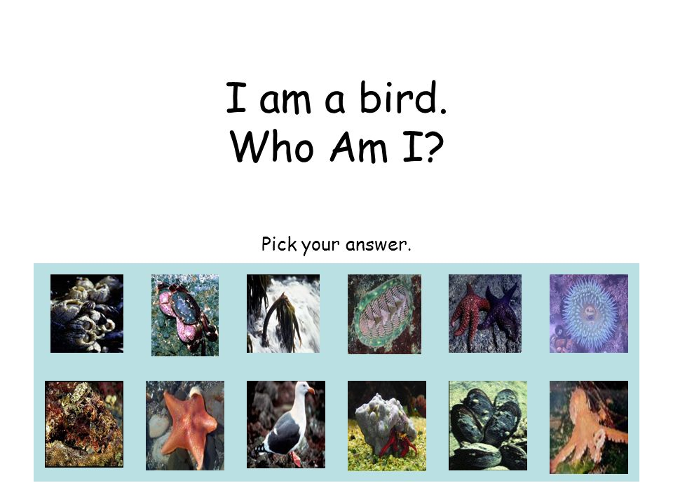 I am a bird. Who Am I? Pick your answer.