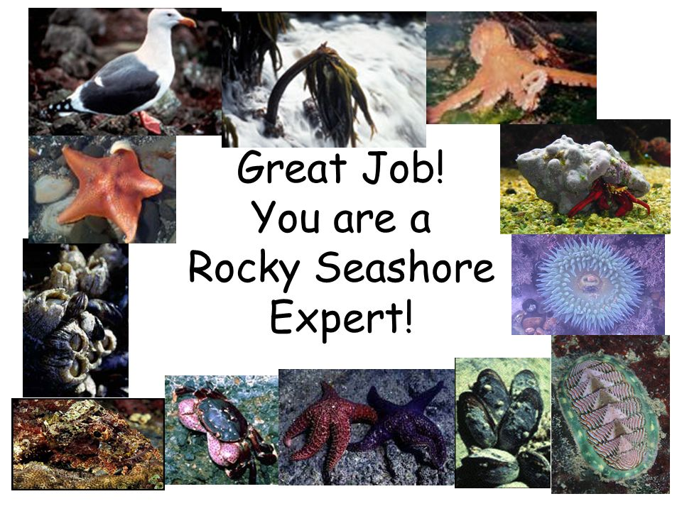 Great Job! You are a Rocky Seashore Expert!