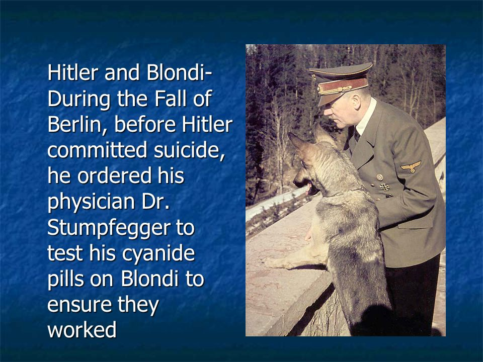 Hitler and Blondi- During the Fall of Berlin, before Hitler committed suicide, he ordered his physician Dr. Stumpfegger to test his cyanide pills on B