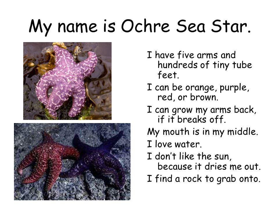My name is Ochre Sea Star. I have five arms and hundreds of tiny tube feet. I can be orange, purple, red, or brown. I can grow my arms back, if it bre