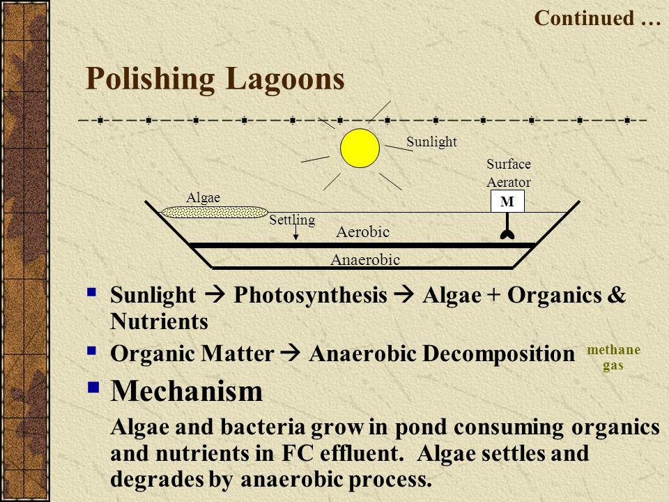 Polishing Lagoons Sunlight Photosynthesis Algae + Organics & Nutrients Organic Matter Anaerobic Decomposition Mechanism Algae and bacteria grow in pon