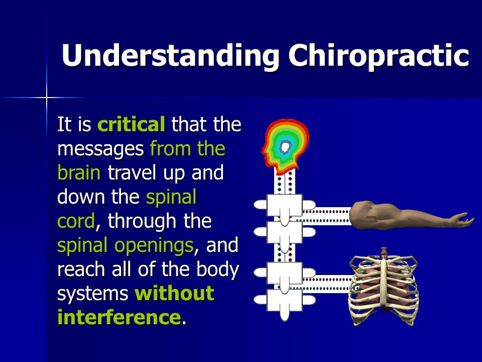 Understanding Chiropractic It is critical that the messages from the brain travel up and down the spinal cord, through the spinal openings, and reach all of the body systems without interference.