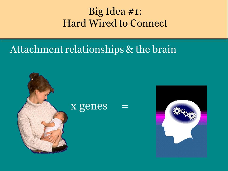 Big Idea #1: Hard Wired to Connect Attachment relationships & the brain x genes =