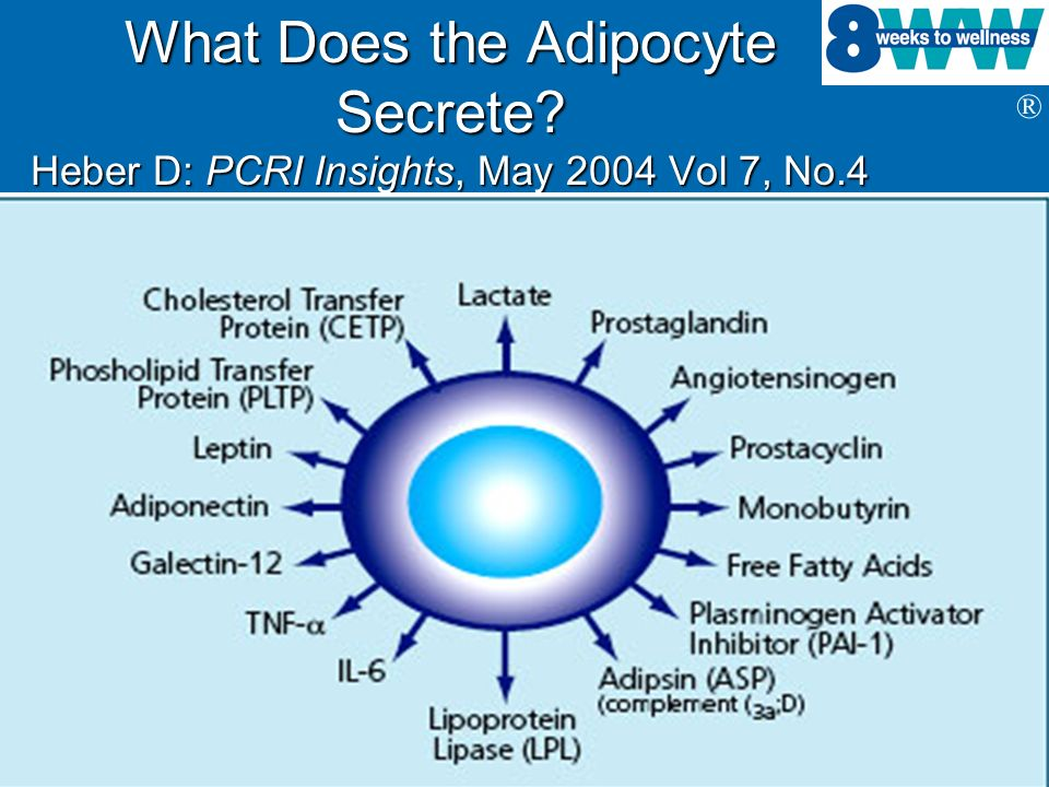 ® What Does the Adipocyte Secrete? Heber D: PCRI Insights, May 2004 Vol 7, No.4