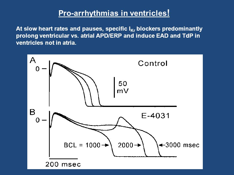 Pro-arrhythmias in ventricles ! At slow heart rates and pauses, specific I Kr blockers predominantly prolong ventricular vs. atrial APD/ERP and induce