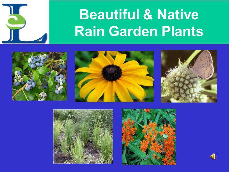 Why Rain Gardens?
