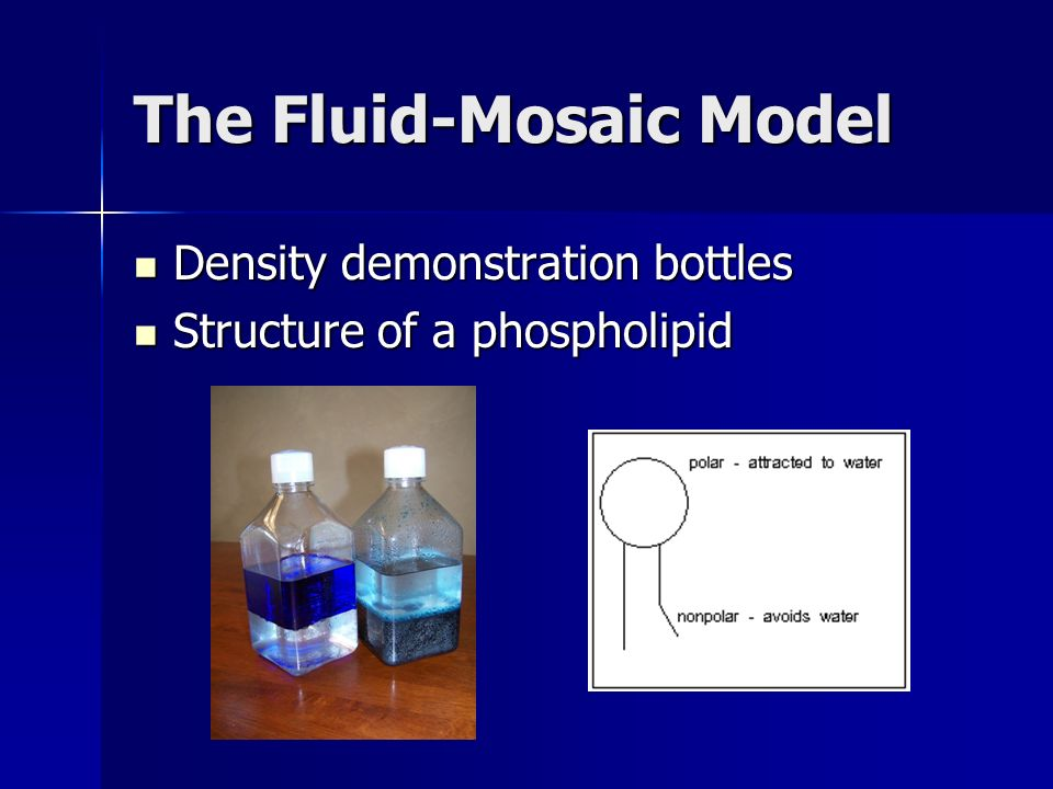 The Fluid-Mosaic Model Density demonstration bottles Density demonstration bottles Structure of a phospholipid Structure of a phospholipid