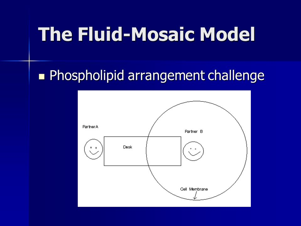 The Fluid-Mosaic Model Phospholipid arrangement challenge Phospholipid arrangement challenge