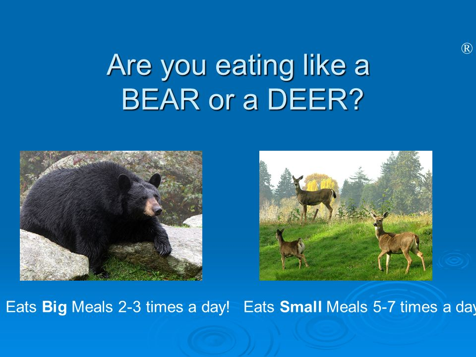 ® Are you eating like a BEAR or a DEER? Eats Big Meals 2-3 times a day!Eats Small Meals 5-7 times a day!